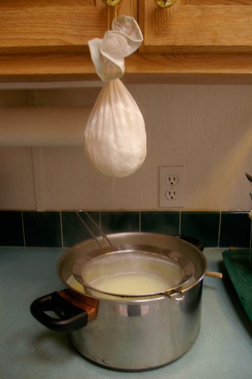 Ricotta curds hanging in jelly bag draining out the whey.