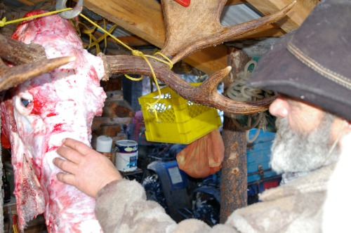 David explains why this moose will make a beautful mount.